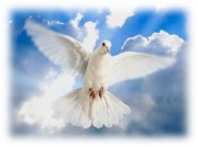 Dove alighting