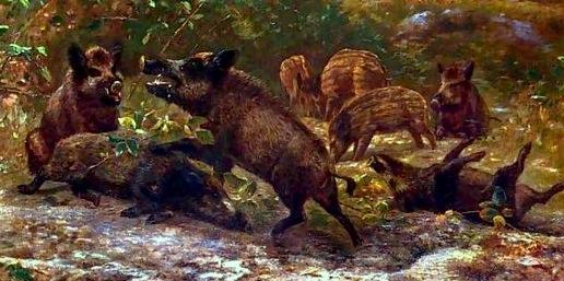 Wild-Boar
